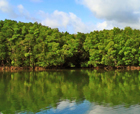 Image of Kalighat Creek, Diglipur Island, Andaman Islands.