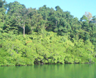 Image of Various Creeks, Mayabunder Island, Andaman Islands.